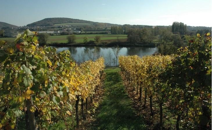 Le vignoble moselle lorraine r gions vins for Haute kontz lorraine