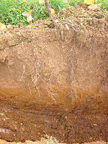 Notion de sol sols viticoles etude des sols for Etude du sol prix