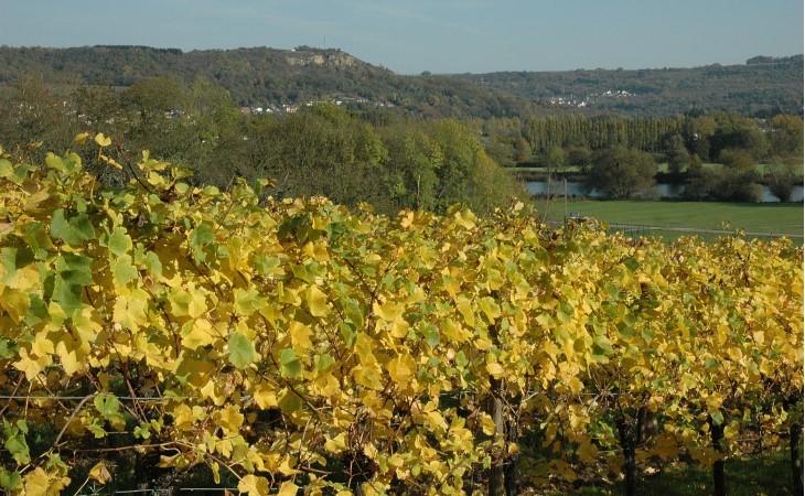 Le vignoble moselle lorraine r gions vins for Haute kontz moselle