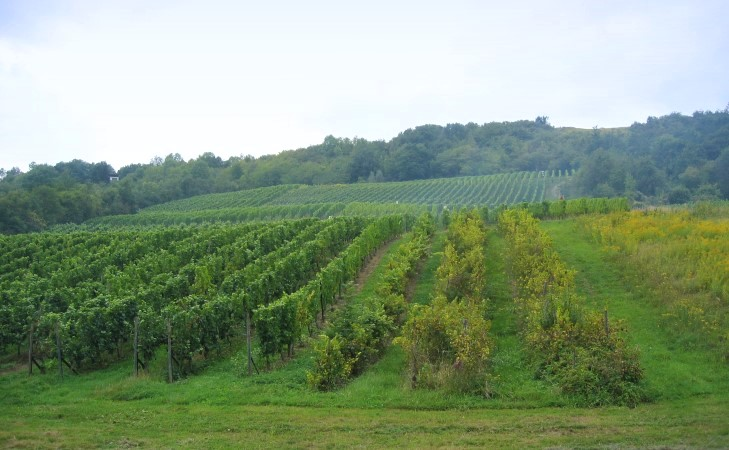 Le vignoble la region lorraine lorraine r gions for Haute kontz moselle