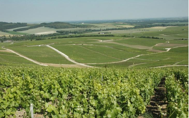 """Résultat de recherche d'images pour """"vigne champagne"""""""