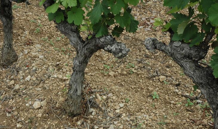 Languedoc (Montpeyroux) - Kalksteengrind