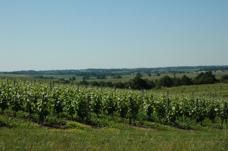 Vignobles-Anjou-Coteaux-du-Layon-photo-Michel-CRIVELLARO.jpg